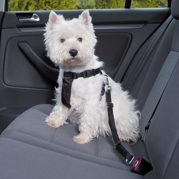 como transportar un perro en coche