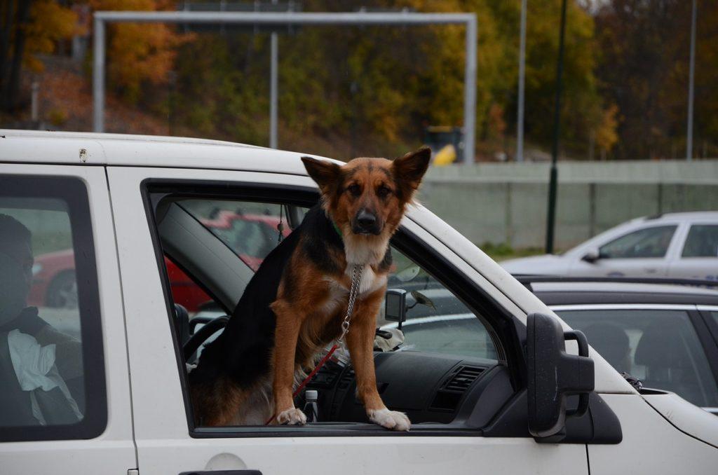 llevar perro en coche multa