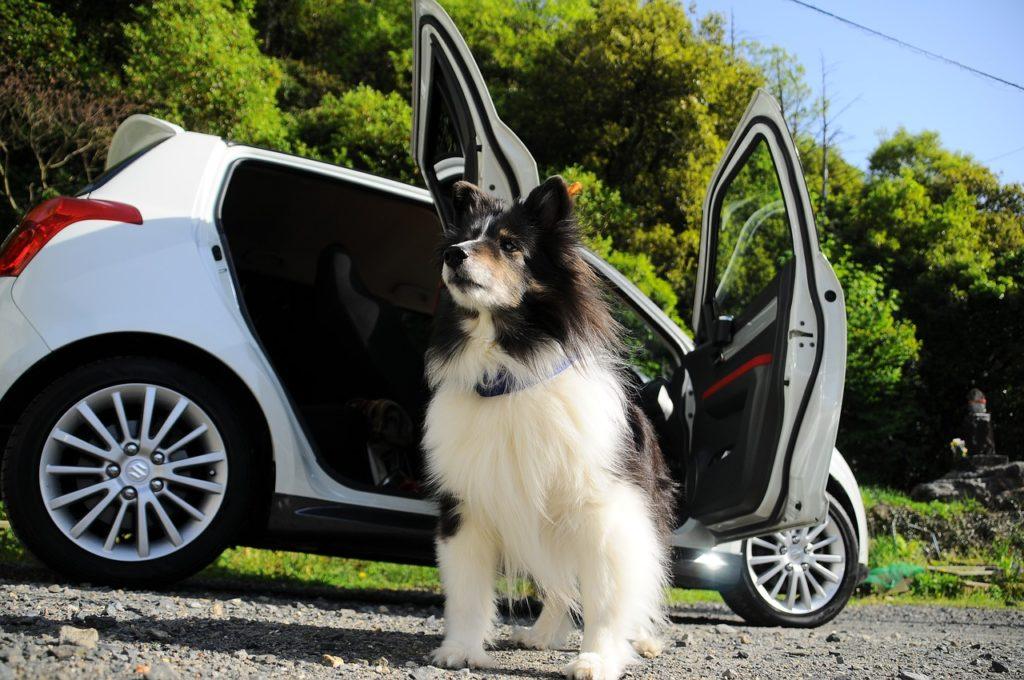 requisitos para viajar con mascotas en auto