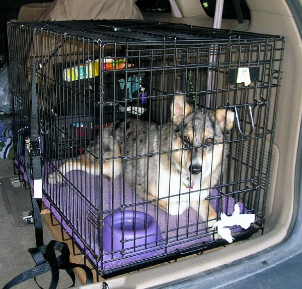 transporte de perros en coche